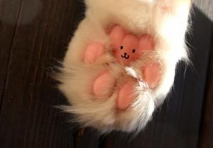 cat_palm