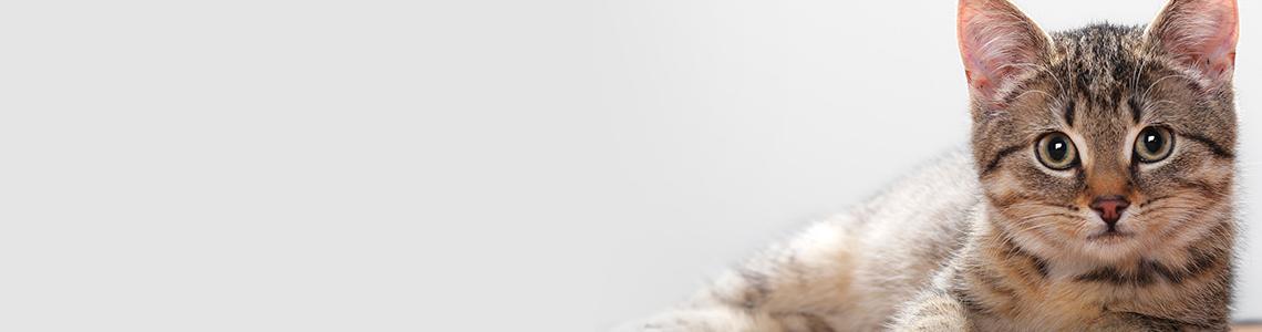 Adopter en katt fra redd dyra i dag!
