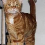 Fritz (1)